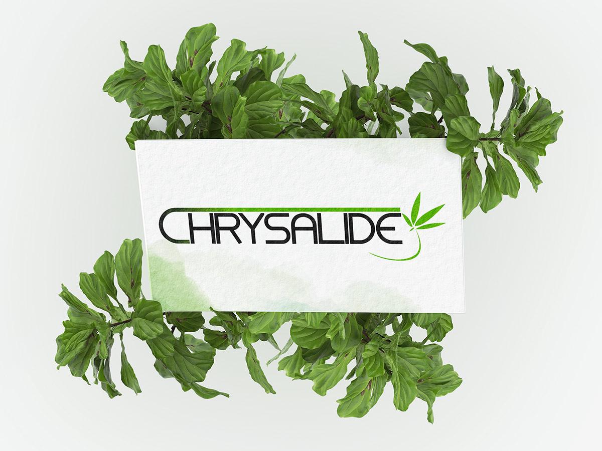 Chrysalide-4